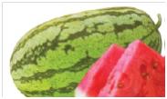 Watermelon Ndovu F1 Image